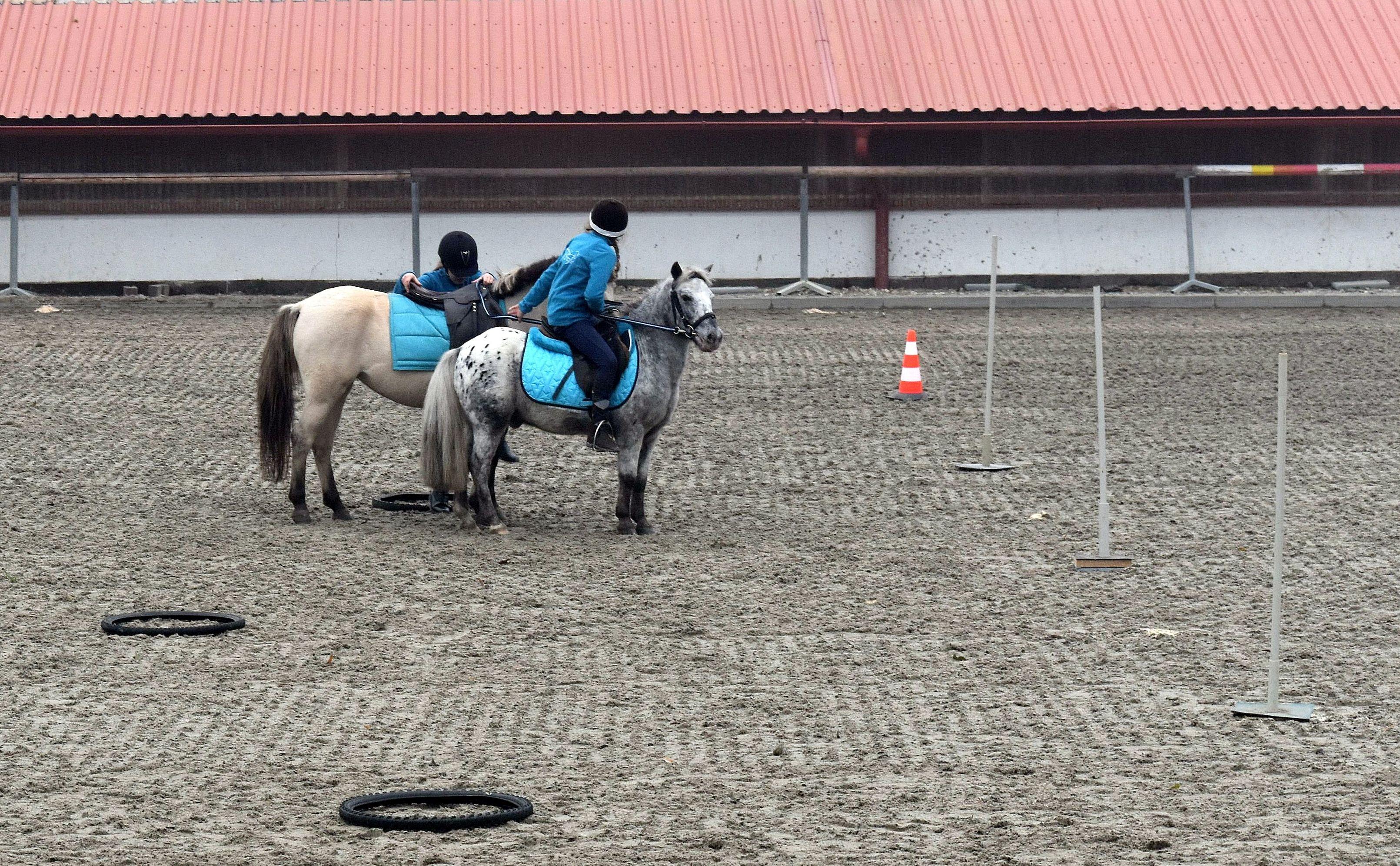 pony-profit-15