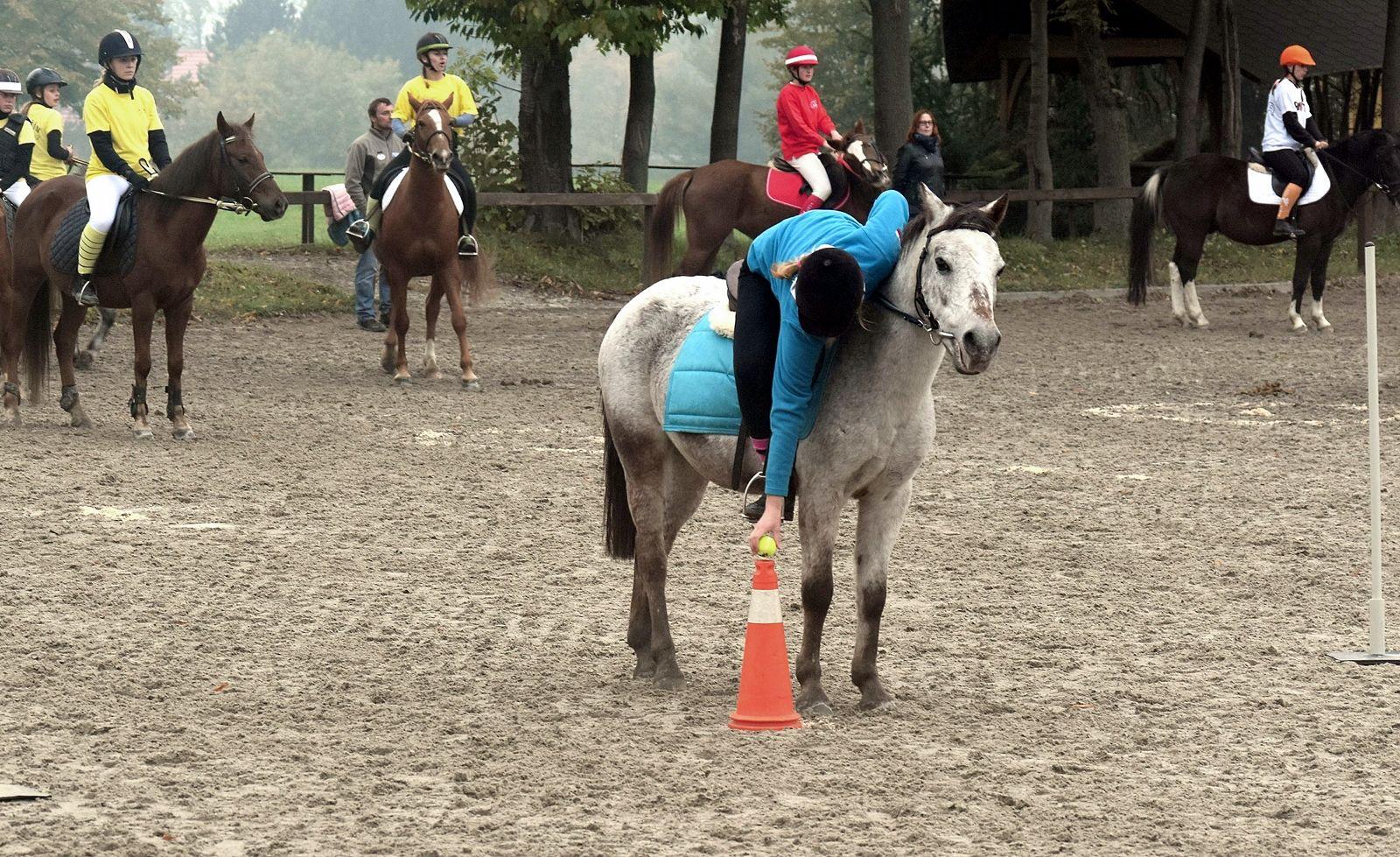 pony-profit-18