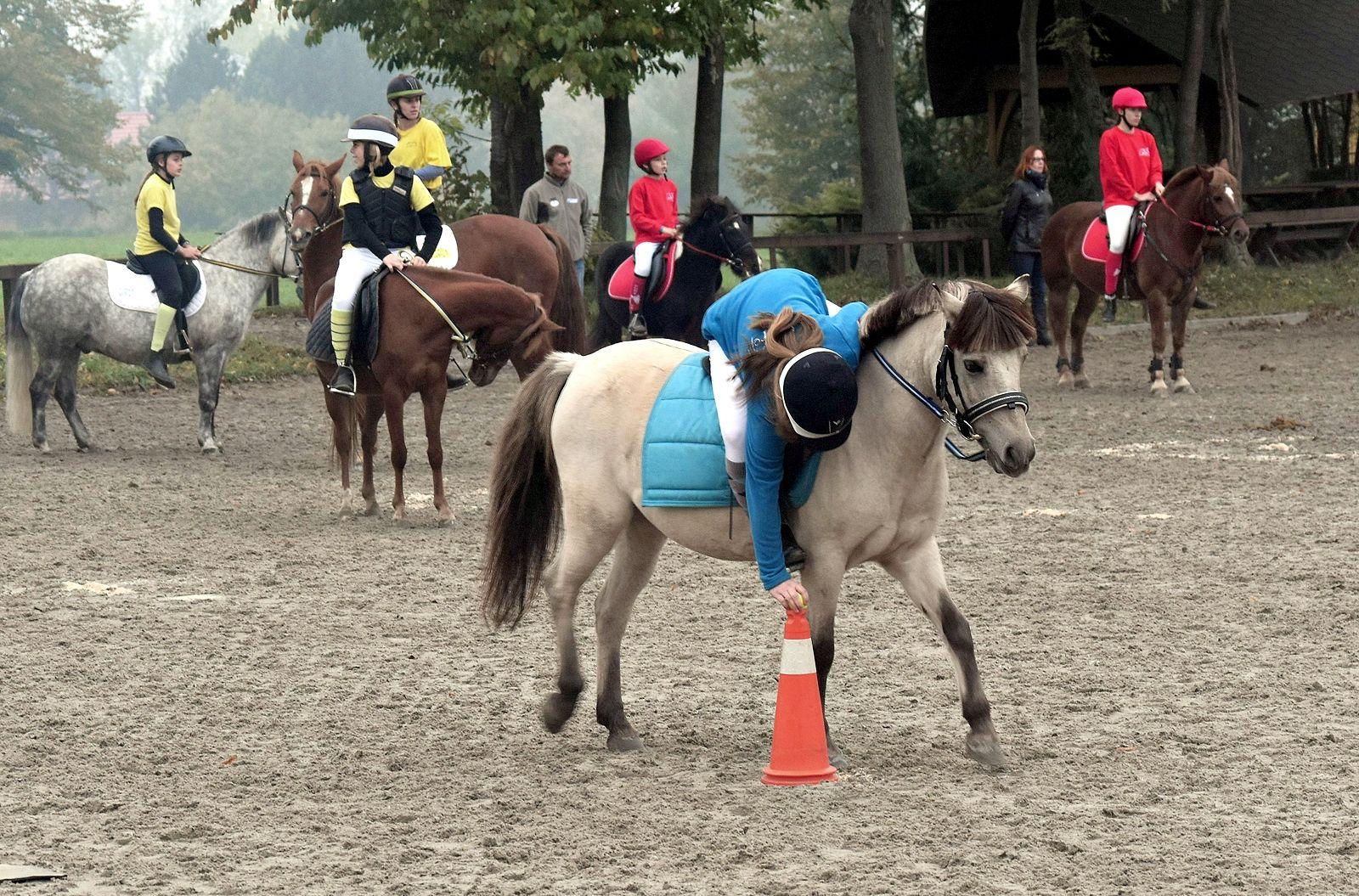 pony-profit-20