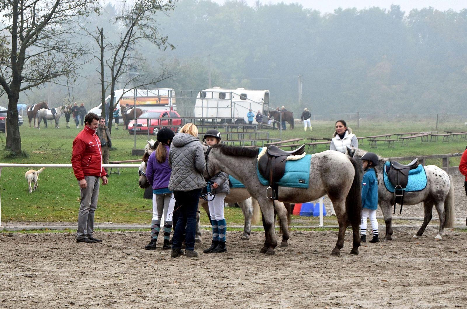 pony-profit-4