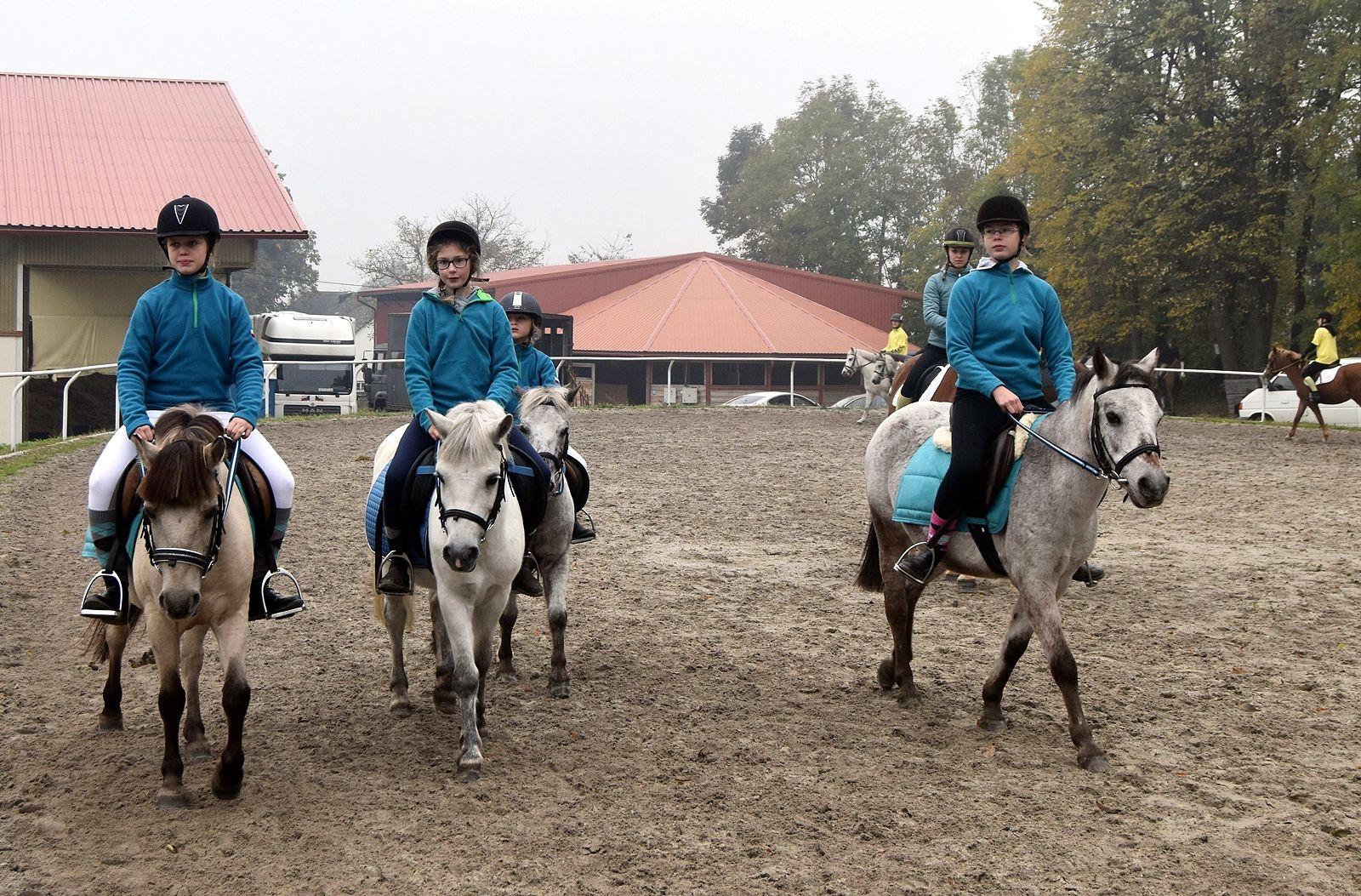 pony-profit-8