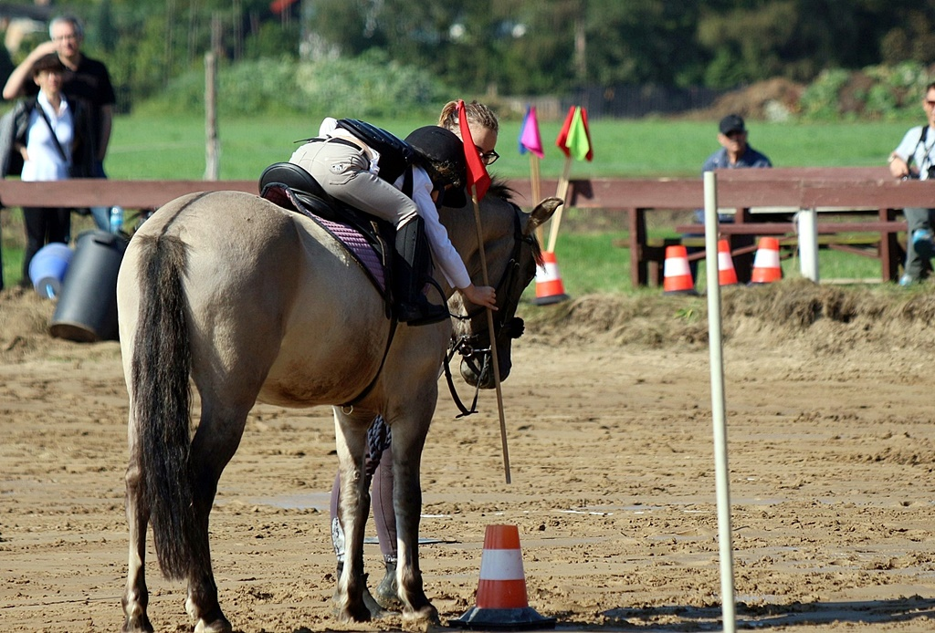 IMG_1082-pony-games-profit