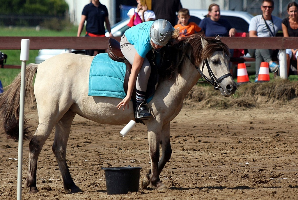 IMG_1669-pony-games-profit