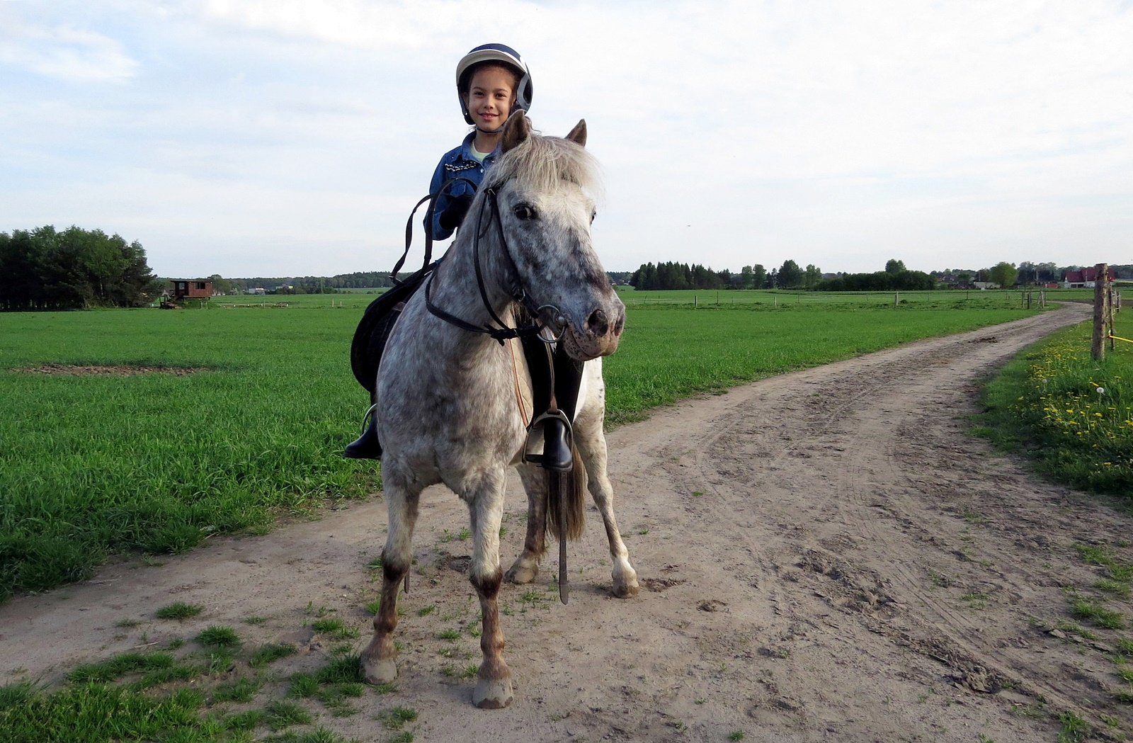 konie-profit-23
