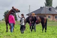 skoki konie profit 1