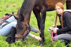 skoki konie profit 2