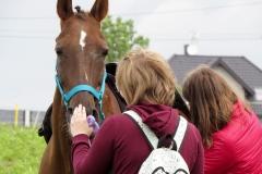 skoki konie profit 3