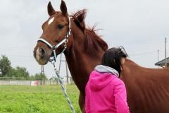 skoki konie profit 4